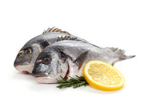 Two seabream with lemon slice and rosemary Royalty Free Stock Photo