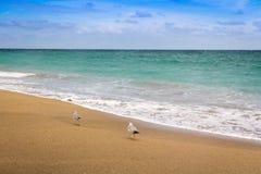 Two seagull bird on the beach Royalty Free Stock Photo