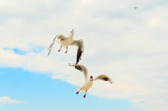 Two Seagull in the blue sky. Funny frame. Stock Photos
