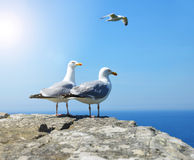 Two Seagull standing on his feet. Stock Photo