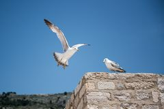 Two seagulls in the background of blue sky stock image