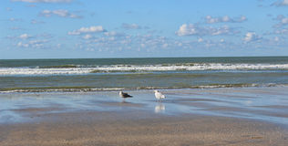 Two seagulls on the beach. France Stock Photos