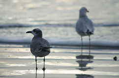 Two seagulls on the beach stock photos