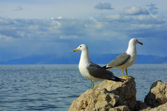 Two seagulls facing opposite ways. Two seagulls facing opposite directions on top of a rock against a cloudy blue sky over water Royalty Free Stock Photo