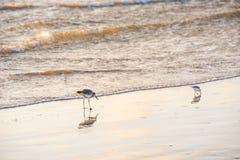 Two seagulls feeding royalty free stock photo
