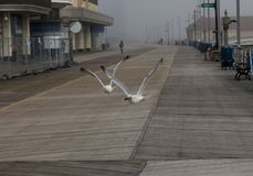 Two seagulls flying inches off of the Atlantic City Boardwalk stock photos