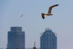 Two seagulls flying over twin towers in Barcelona Stock Images