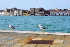 Two seagulls on the Giudecca canal, Venice Stock Photo