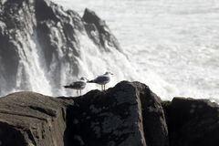 Two seagulls on a high cliff Stock Photo