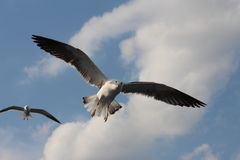 Two seagulls live in the clouds. Royalty Free Stock Photos