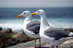 Two seagulls near sea Stock Images