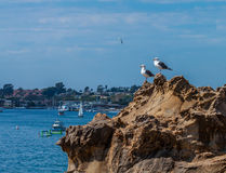 TWO SEAGULLS OVERLOOKING NEWPORT HARBOR Stock Photography