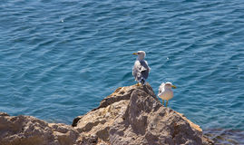 Two seagulls perched on rock Stock Photo