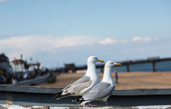 Two seagulls pose on fishing boat Royalty Free Stock Image