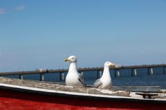 Two seagulls pose on fishing boat Royalty Free Stock Photos