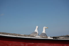 Two seagulls pose on fishing boat Royalty Free Stock Images