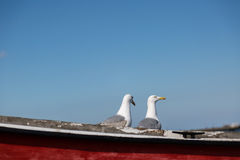 Two seagulls pose on fishing boat Stock Photo