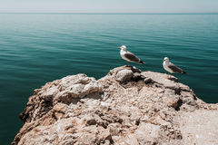 Two Seagulls on a rock Stock Images