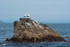Two seagulls on a rock jutting out of the sea. Reserve Royalty Free Stock Photo
