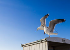Two seagulls on the roof of beach cabins. Stock Photos