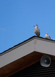 Two seagulls on a roof Royalty Free Stock Photos