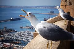 Two seagulls scream, raising their heads on the edge of the fortress by the sea Stock Photography