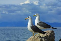 Two seagulls side by side against sky stock photos