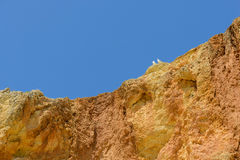 Two seagulls sitting on cliff top Royalty Free Stock Photo