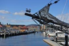 Free Two Seagulls Sitting On A Sailboat Mast In Hobart Tasmania Australia Royalty Free Stock Images - 144645549