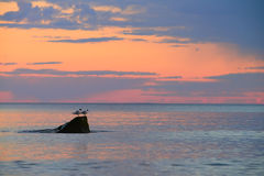 Two seagulls sitting on a stone over the calm sea surface. On a sunset Royalty Free Stock Photo