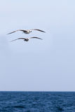 Two seagulls soaring over the sea Royalty Free Stock Photos