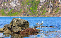 Two seagulls stand on a rock in an ocean bay Royalty Free Stock Images