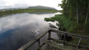 Two seagulls standing on wooden rail close up with pond background stock video