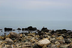 Two seagulls on the stones Royalty Free Stock Images
