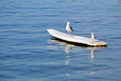 Two seagulls on a surf Stock Photo