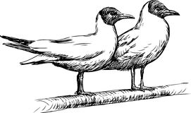 Two seagulls Royalty Free Stock Photos