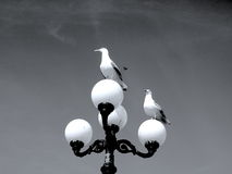 Two Seagulls waiting for the third one Stock Photos