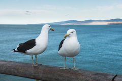 Two seagulls on wooden railing of a pier Royalty Free Stock Image