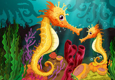 Two seahorses under the sea Royalty Free Stock Images