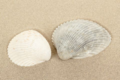 Two seashell in sand Stock Photos