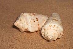 Two seashells Stock Photo