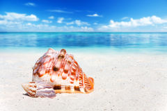Two Seashells on the Beach Stock Photos