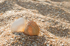 Two seashells kissing Stock Photography