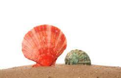 Two seashells on sand Stock Images