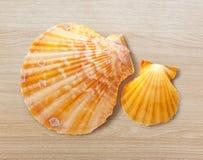 Two seashells Stock Photos
