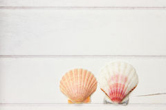 Two seashells on a wooden surface Stock Image