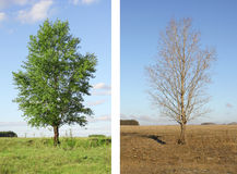 Two seasons Royalty Free Stock Photography