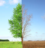 Two seasons Royalty Free Stock Photo