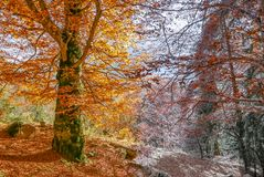 Two seasons transition from autumn to winter Royalty Free Stock Photo