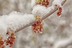 Two Seasons Royalty Free Stock Image